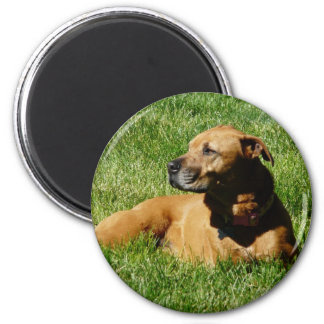 dog,pitbull/boxer mix 6 cm round magnet