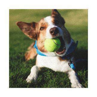 Dog Playing with its ball Canvas Print
