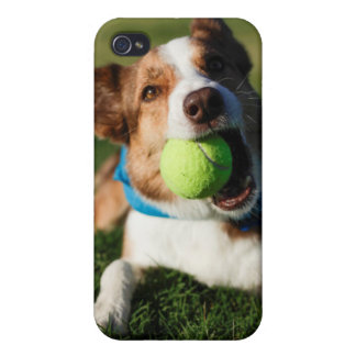 Dog Playing with its ball iPhone 4/4S Case