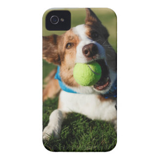 Dog Playing with its ball iPhone 4 Cases