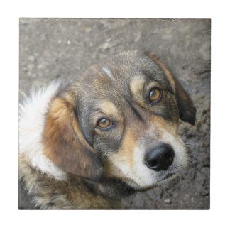 Dog portrait ceramic tile