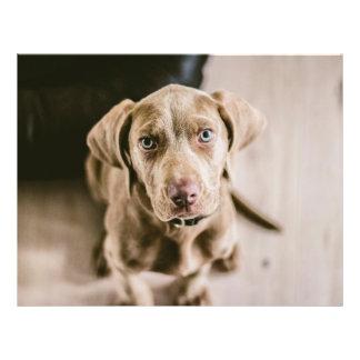 Dog portrait flyer