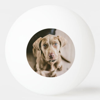 Dog portrait ping pong ball