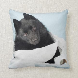 Dog portrait - Schipperke Cushion