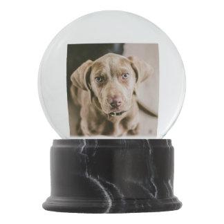Dog portrait snow globe