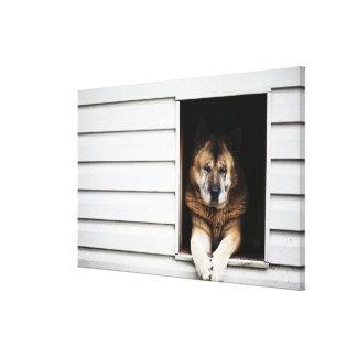 dog portrait stretched canvas print