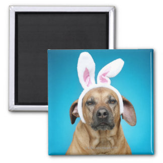 Dog portrait wearing Easter bunny ears Square Magnet