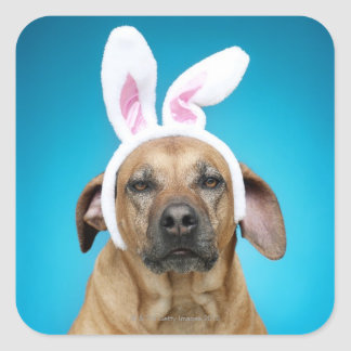 Dog portrait wearing Easter bunny ears Square Sticker