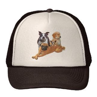 Dog posse with cat cap