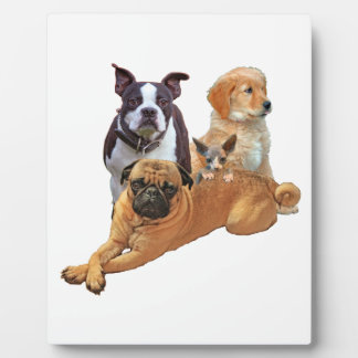 Dog posse with cat plaque
