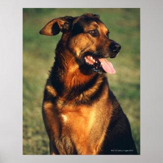 dog print