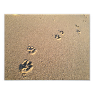Dog Print in the Sand