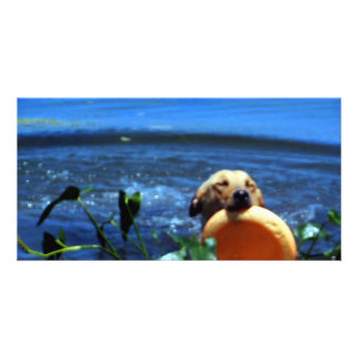 Dog Retrieves with Eyes Closed Photocard Picture Card
