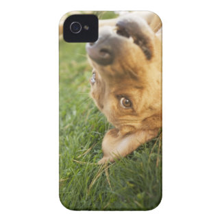 Dog rolling on back Case-Mate iPhone 4 cases