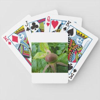 Dog Rose Hip Poker Deck