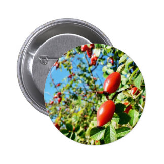 Dog Rose Hips Buttons