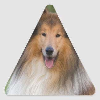 dog rough collie wait for love triangle sticker