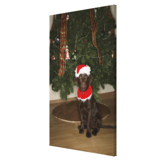 Dog sitting by a Christmas tree Canvas Prints