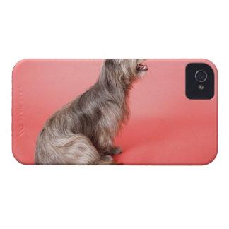 Dog sitting iPhone 4 Case-Mate case