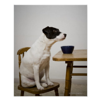 Dog sitting on a chair in front of a bowl on the poster