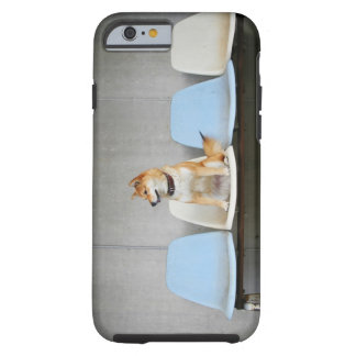 Dog sitting on bench tough iPhone 6 case