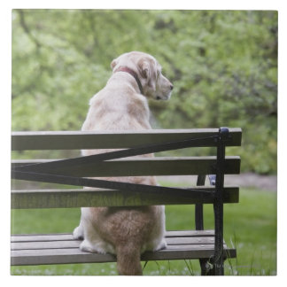 Dog sitting on park bench ceramic tile