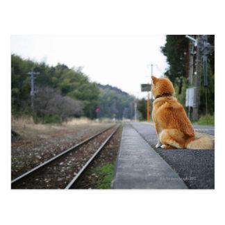 Dog sitting on train station post cards
