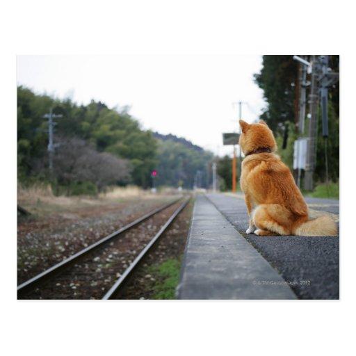 Dog Choo Choo Train