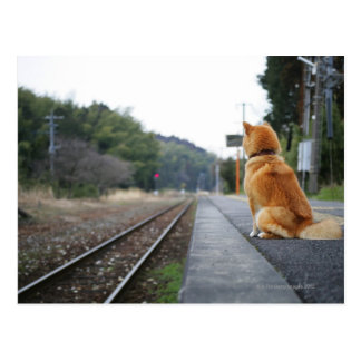 Dog sitting on train station post cards