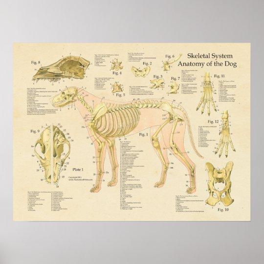 Dog Skeletal System Bones Anatomy Chart