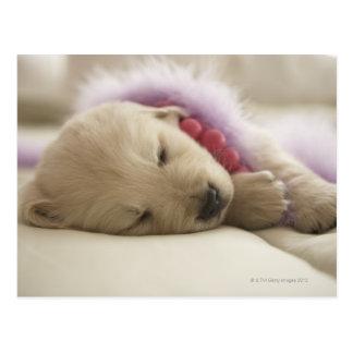 Dog sleeping on bed postcard