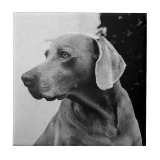 dog small square tile