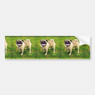 dog smile pug cute bumper sticker