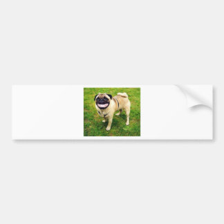dog smile pug cute bumper sticker