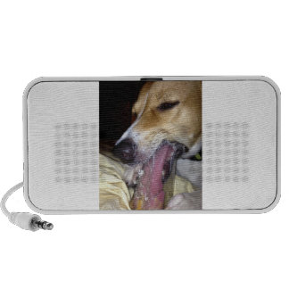 dog travelling speakers