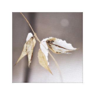 Dog Strangling Vine Seed Pods Winter Snow Soft Canvas Print