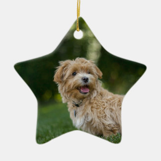Dog Summer Out Pet Animal Fun Happy Vacation Ceramic Ornament