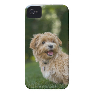 Dog Summer Out Pet Animal Fun Happy Vacation iPhone 4 Case
