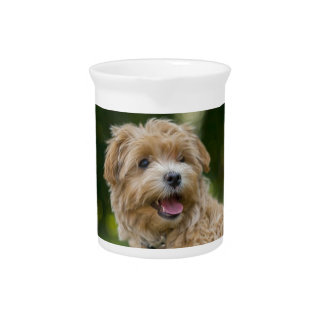 Dog Summer Out Pet Animal Fun Happy Vacation Pitcher