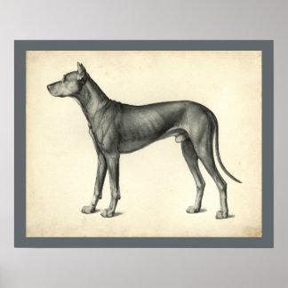 Dog Surface Topography Anatomy Print