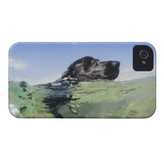 Dog swimming in water iPhone 4 case