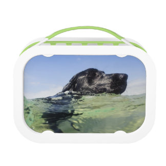 Dog Swimming Lunch Box