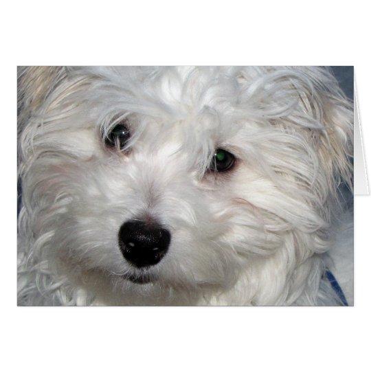Dog Sympathy Card