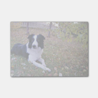 Dog Themed, Border Collie Lies In Yard With Fallen Post-it Notes
