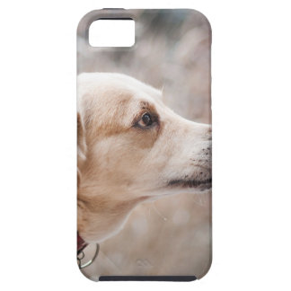 dog tough iPhone 5 case
