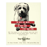 Dog Walking Flyer - Personalise All Text