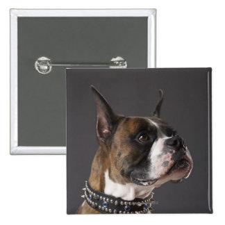 Dog wearing collar, looking away 15 cm square badge