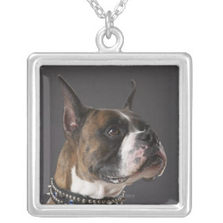 Dog wearing collar, looking away silver plated necklace