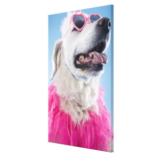 Dog wearing heart shaped classes and tu-tu stretched canvas prints