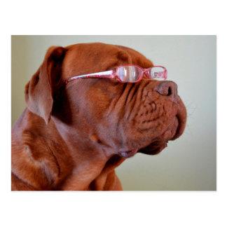 Dog Wearing Pink Eyeglasses Postcard